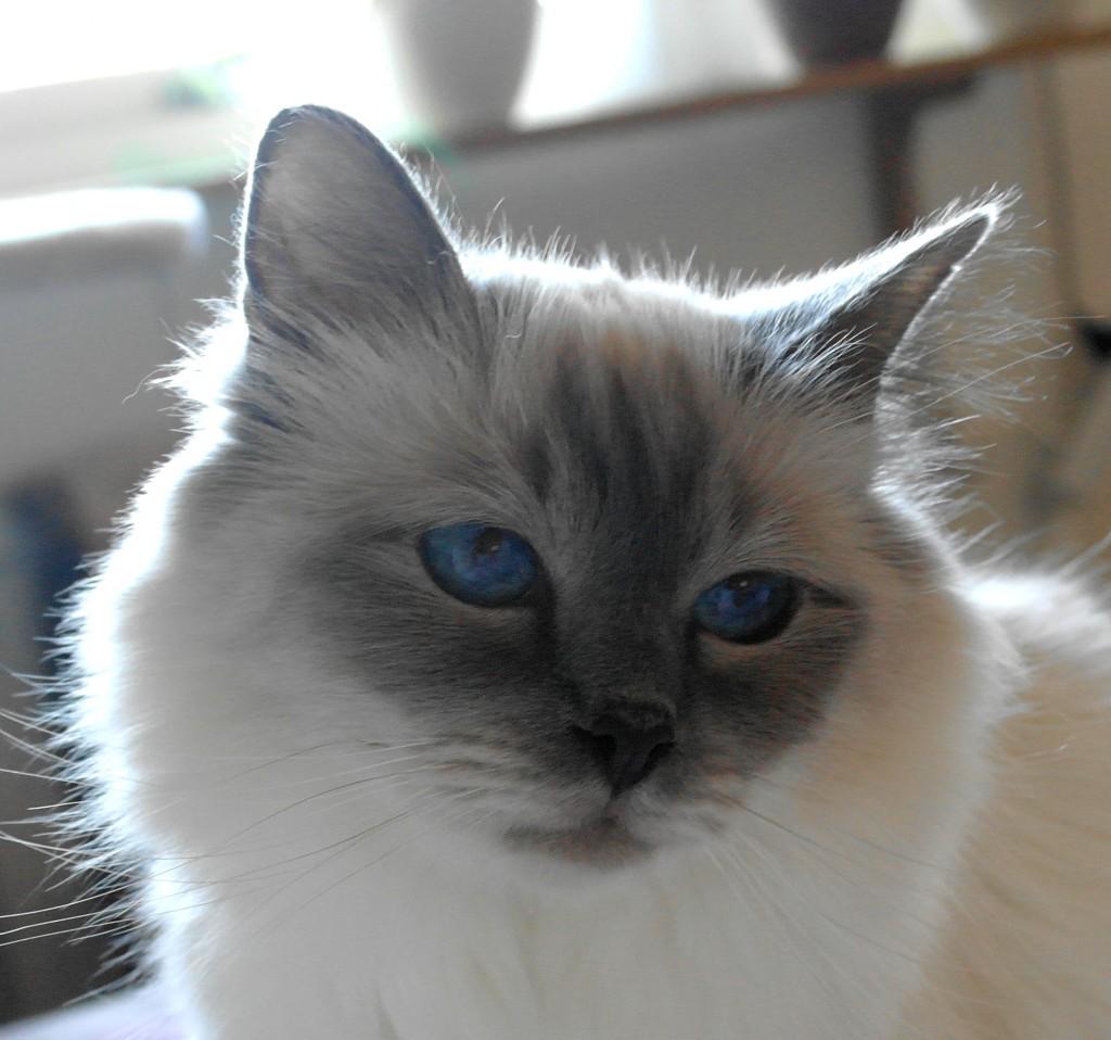 Vackra blå ögon