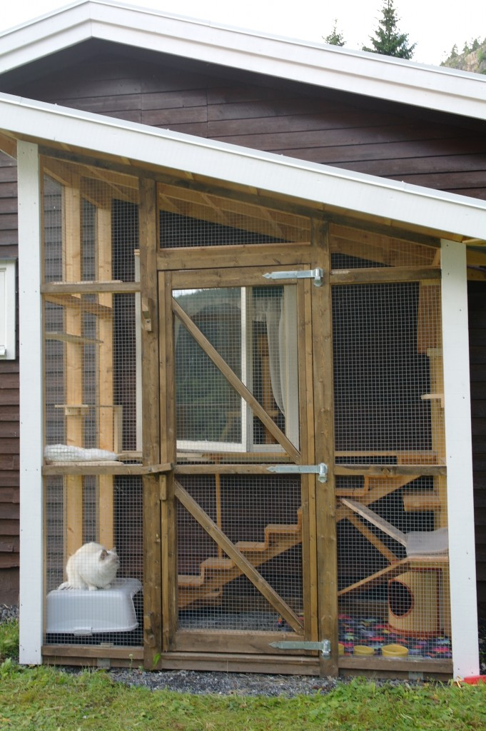 Katterna trivs i nya rastgården